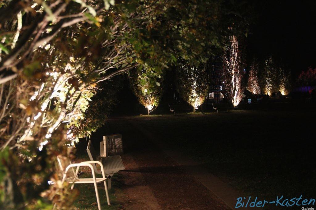 Herbstlichter im Park